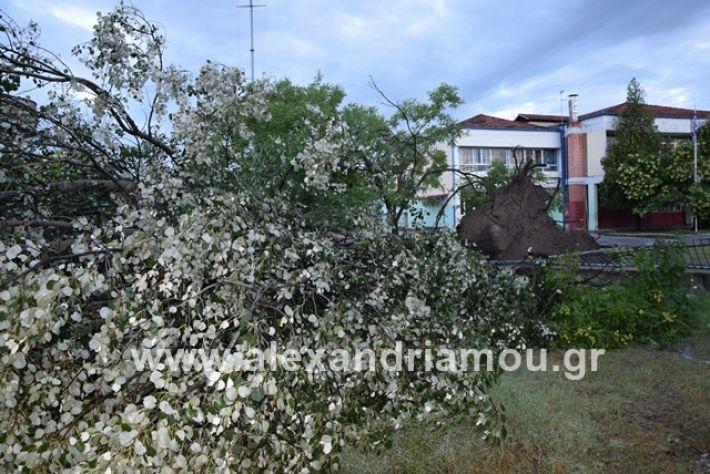 alexandriamou.gr_mpourini1201900027