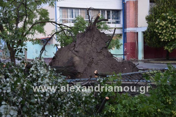 alexandriamou.gr_mpourini1201900028