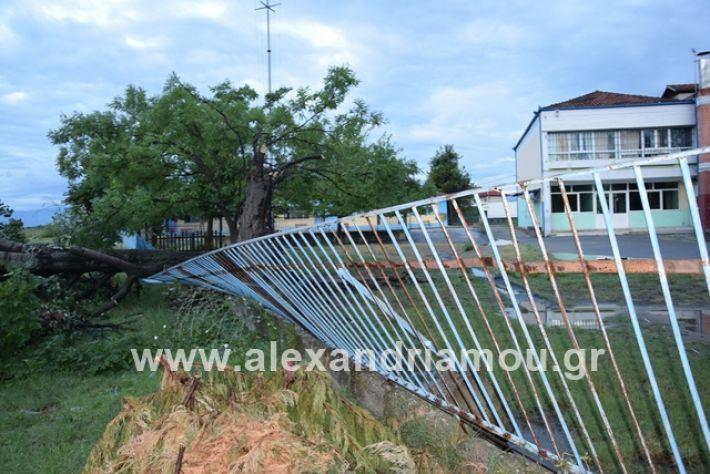 alexandriamou.gr_mpourini1201900029