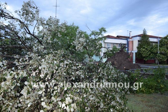 alexandriamou.gr_mpourini1201900032