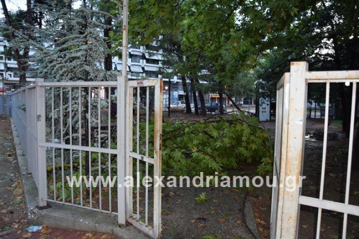 alexandriamou.gr_mpourini1201900036