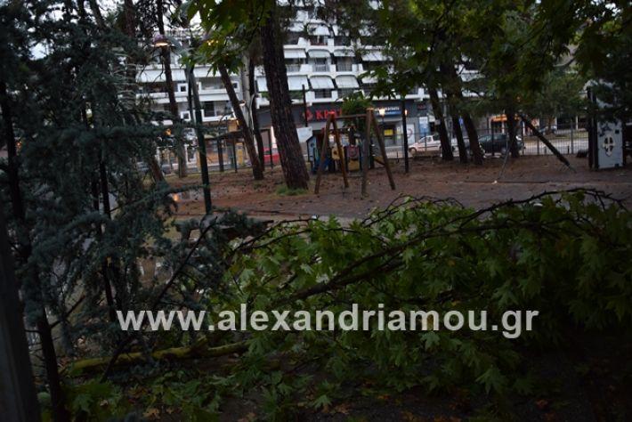 alexandriamou.gr_mpourini1201900037