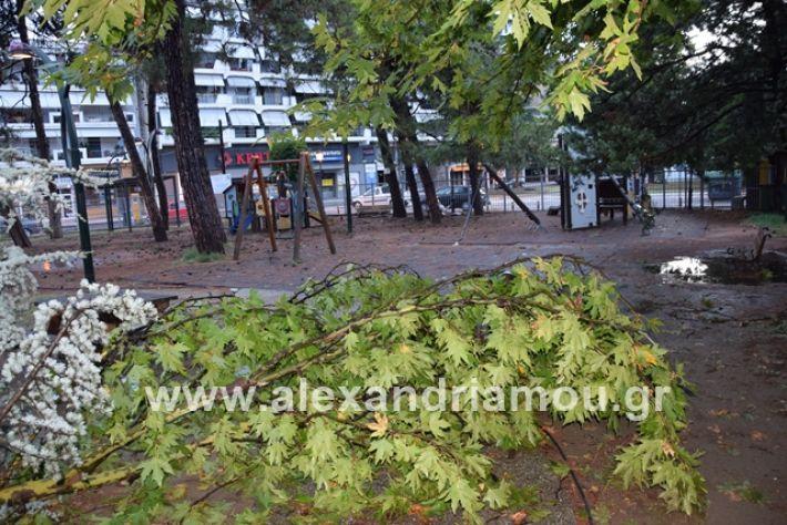alexandriamou.gr_mpourini1201900038