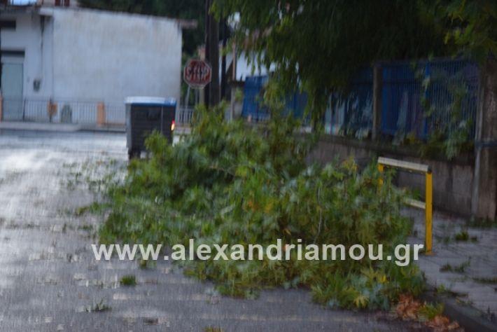 alexandriamou.gr_mpourini1201900039