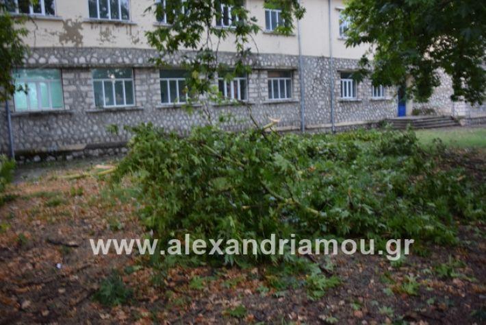 alexandriamou.gr_mpourini1201900040