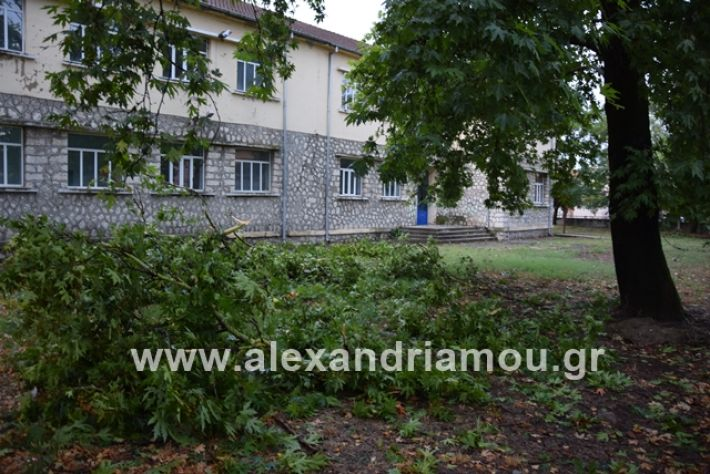 alexandriamou.gr_mpourini1201900041