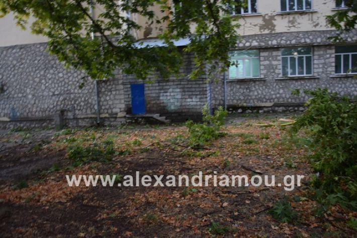 alexandriamou.gr_mpourini1201900042