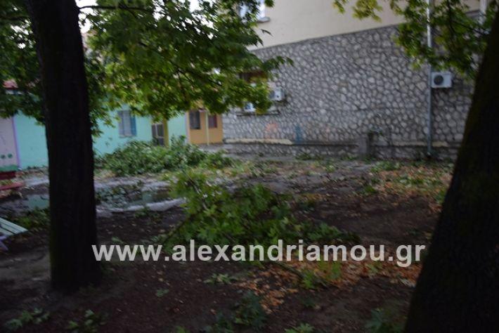 alexandriamou.gr_mpourini1201900044