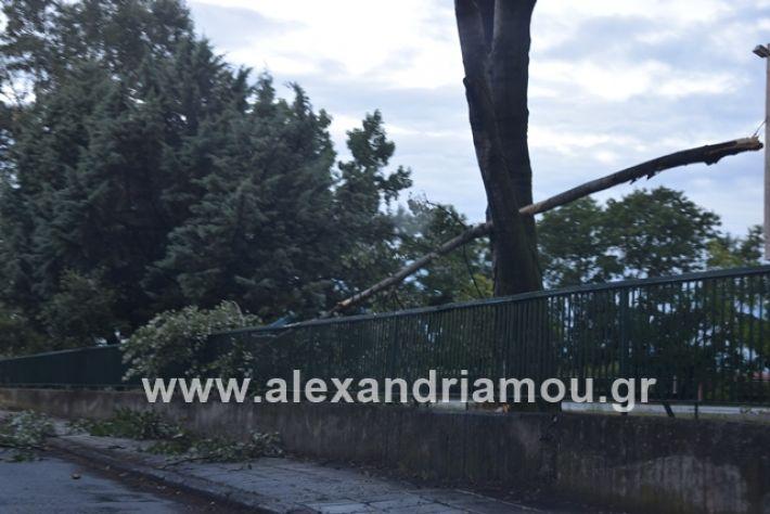 alexandriamou.gr_mpourini1201900045