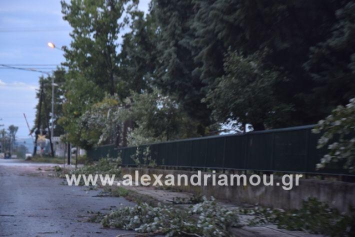alexandriamou.gr_mpourini1201900047
