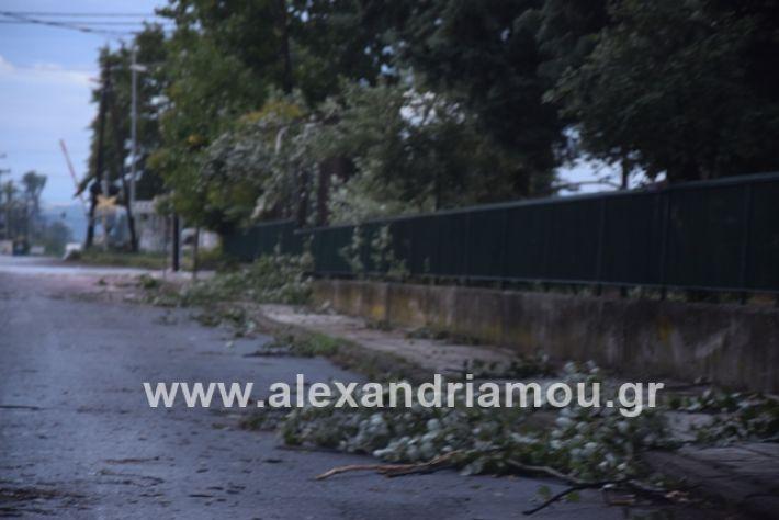 alexandriamou.gr_mpourini1201900048