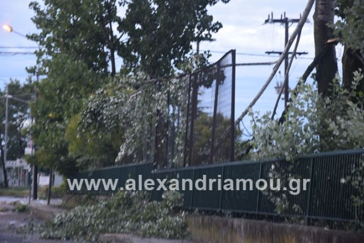 alexandriamou.gr_mpourini1201900049