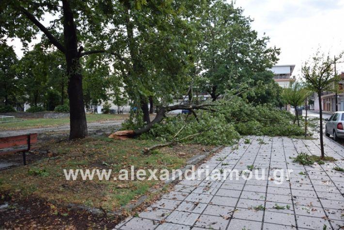 alexandriamou.gr_mpourini1201900055