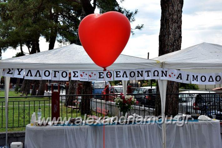 alexandriamou.gr_neoxori_aimodosia20DSC_1308