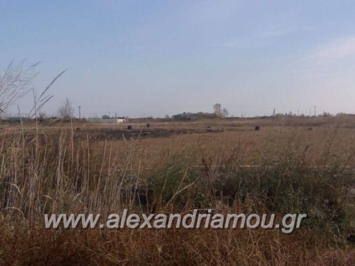alexandriamou.gr_oikopeda002