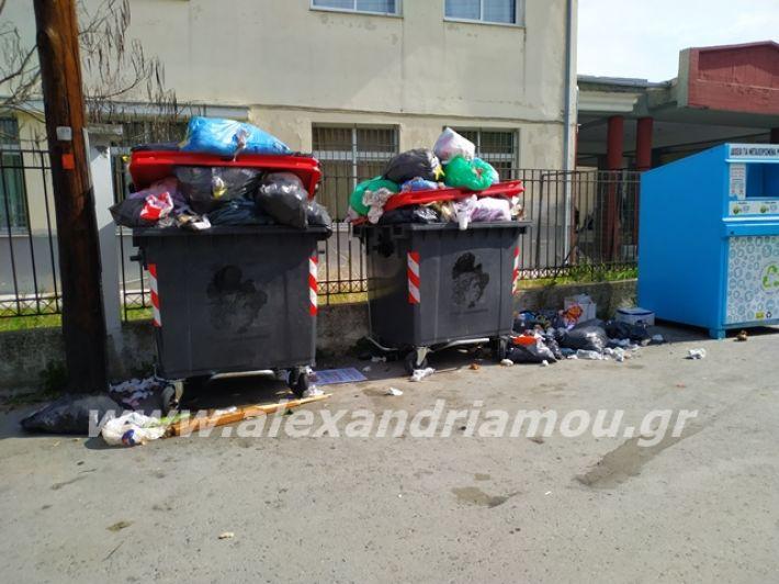 alexandriamou.gr_skoupidia3.3.20000