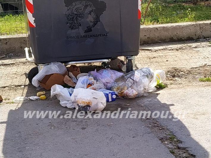 alexandriamou.gr_skoupidia3.3.20025