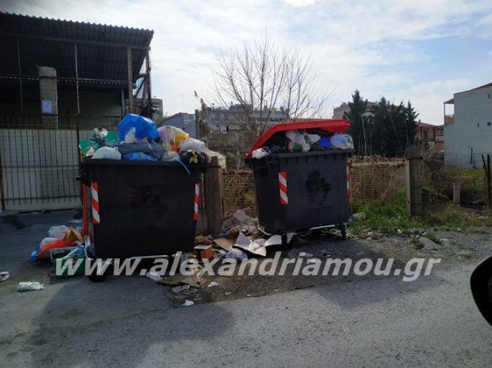 alexandriamou.gr_skoupidia3.3.20104