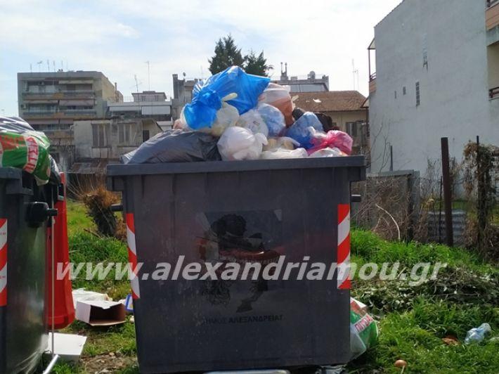 alexandriamou.gr_skoupidia3.3.20113