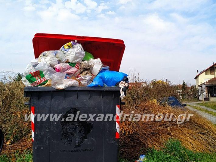 alexandriamou.gr_skoupidia3.3.20115