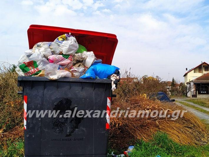 alexandriamou.gr_skoupidia3.3.20117