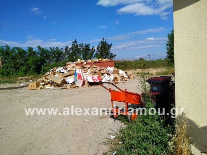 alexandriamou.gr_skoupidiaamfitheatro2019012