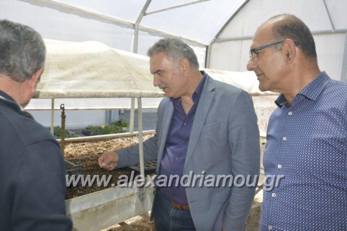 alexandriamou_teligiannidispaidiaanoiksis2019064