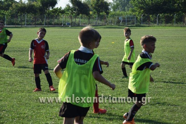 alexandriamou_tulemaxi177045