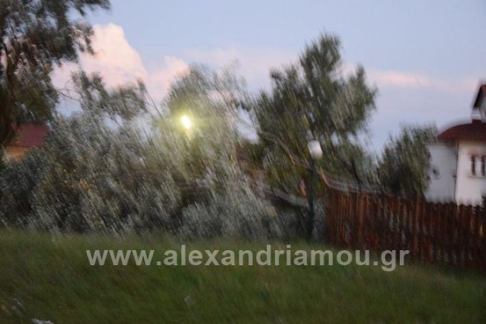 alexandriamou.gr_trikala2222DSC_0318