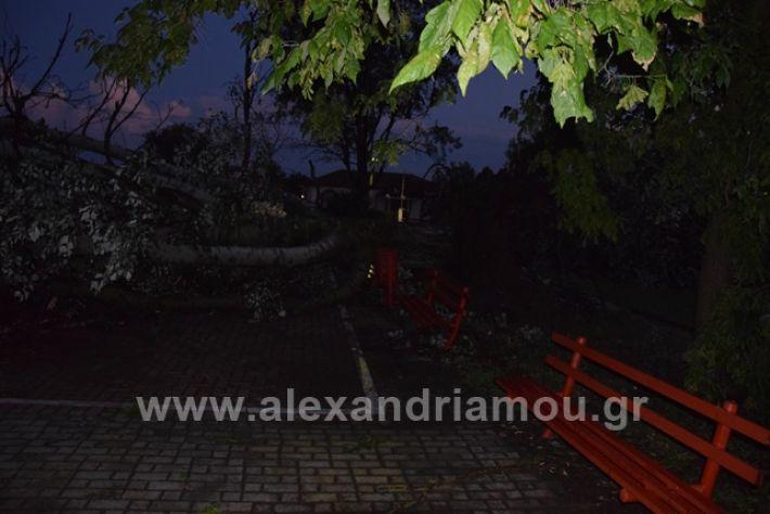 alexandriamou.gr_trikala2222DSC_0324