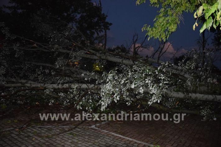 alexandriamou.gr_trikala2222DSC_0325