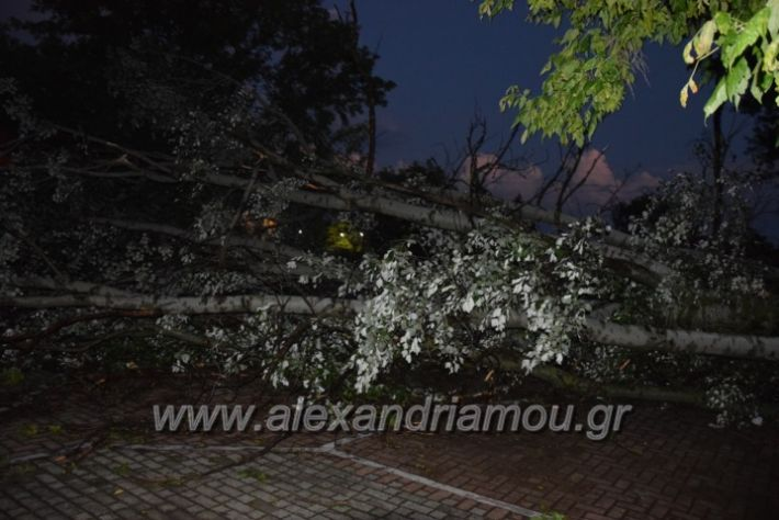 alexandriamou.gr_trikala_katastrofes001