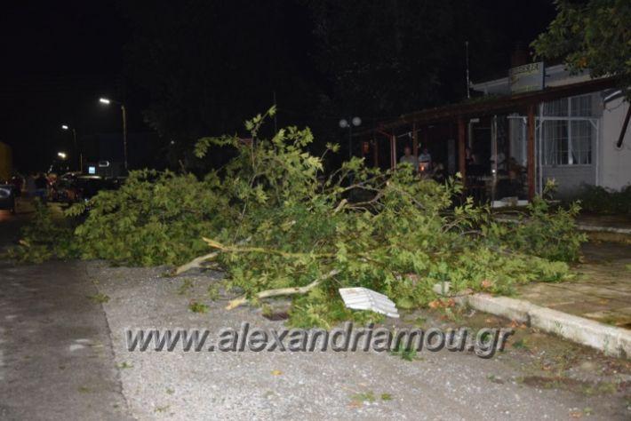 alexandriamou.gr_trikala_katastrofes028