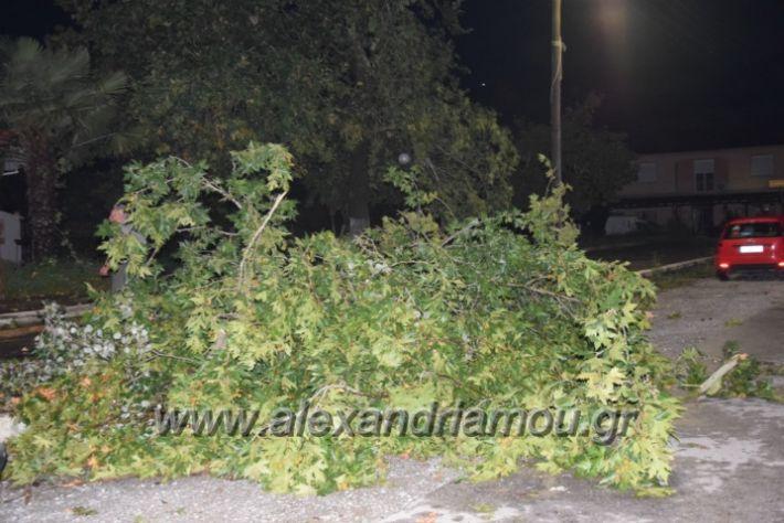 alexandriamou.gr_trikala_katastrofes029