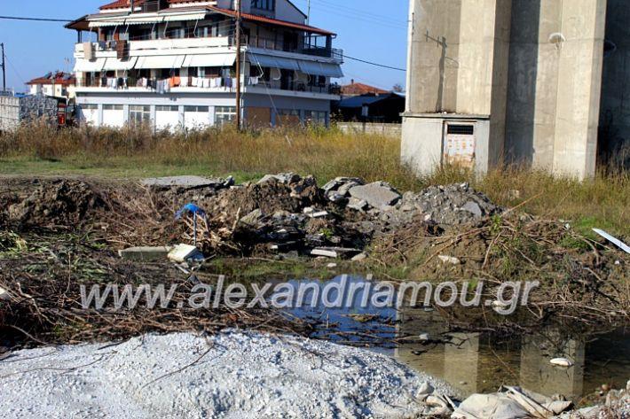 alexandriamou.gr_udragogeio2019IMG_9942