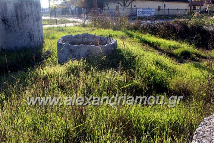 alexandriamou.gr_udragogeio2019IMG_9995