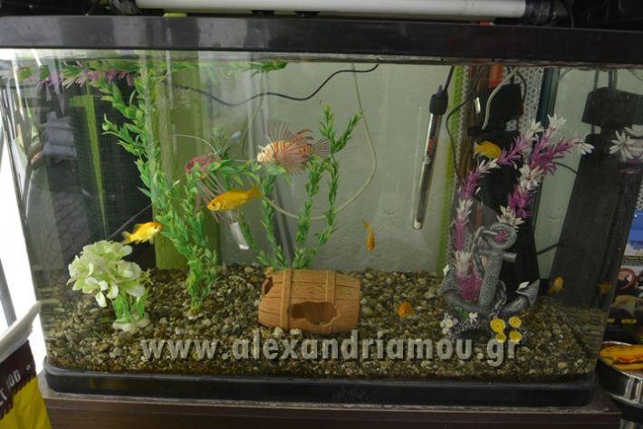 alexandriamou_zootechnika026
